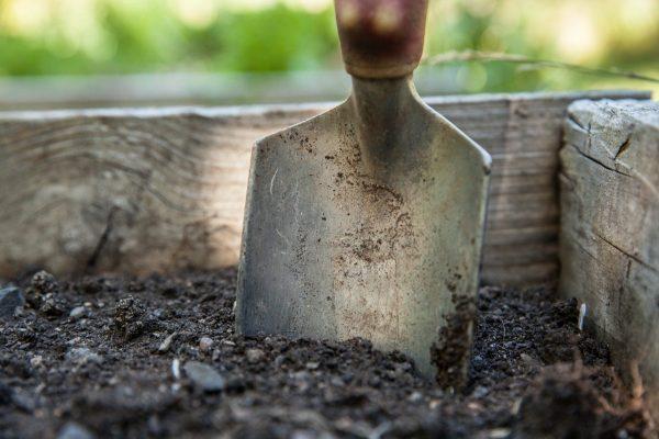 garden-1176406_1280